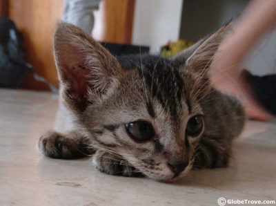Cat adoption drive