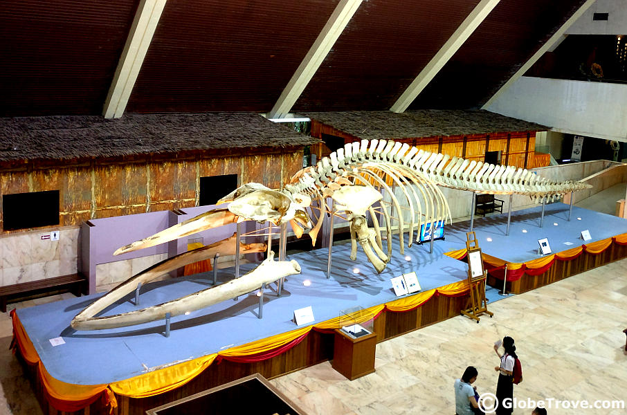 The Sabah museum whale