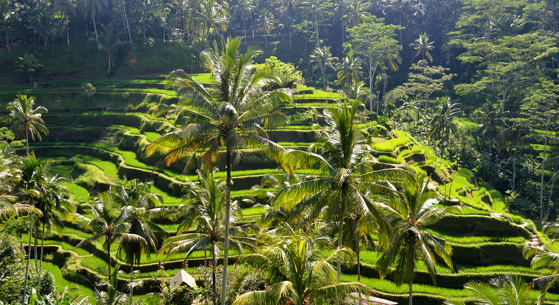 Indonesia Travel blog Ubud Rice fields
