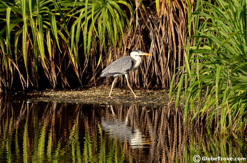 Bird watching is one of the most amazing things to do in Addu atoll
