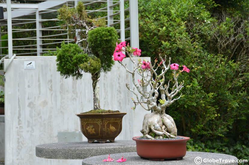The bonsai garden in Singapore Botanic Gardens.