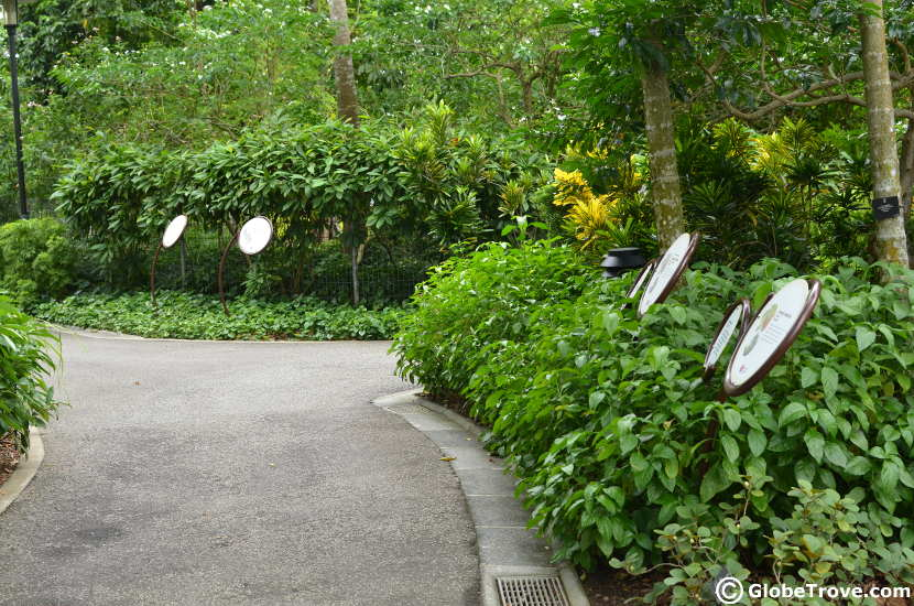 The healing garden in Singapore Botanic gardens