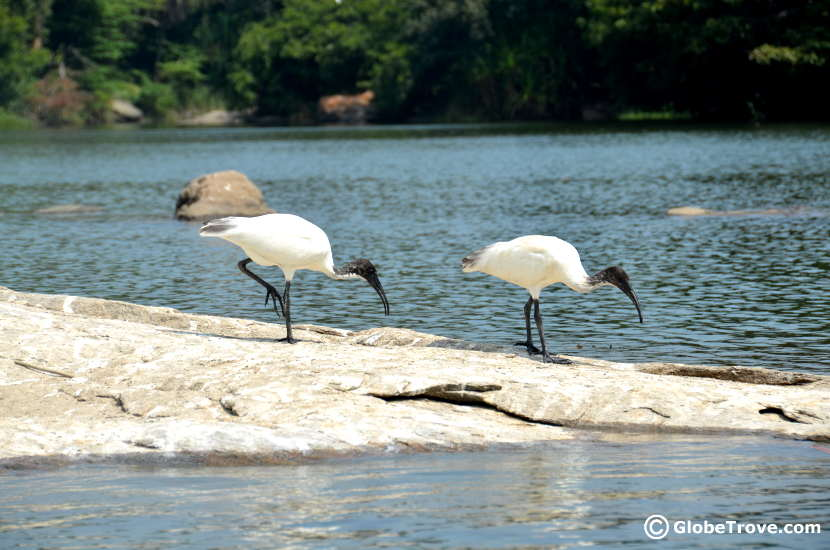 Looking for a place to watch the birds near Bangalore?