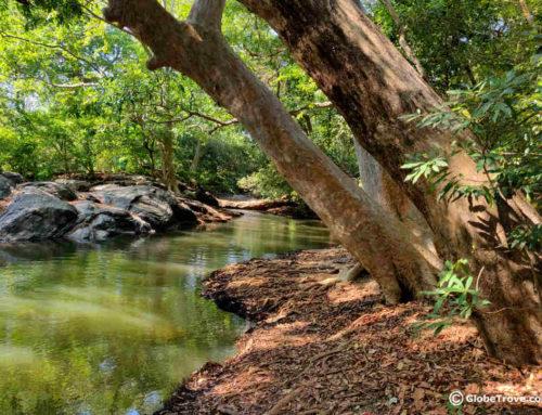 Yala National Park Safari: Observing Nature Ethically
