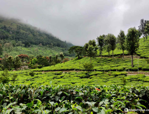 A Day Trip To Munnar: Things To Do And Places To See