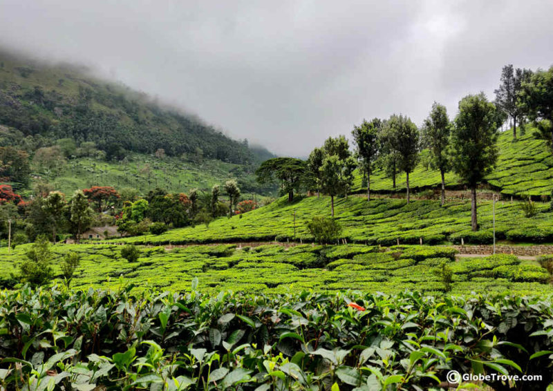 Day trip to Munnar