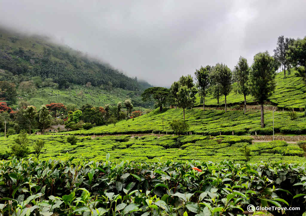 A Day Trip To Munnar: Things To Do And Places To See - GlobeTrove