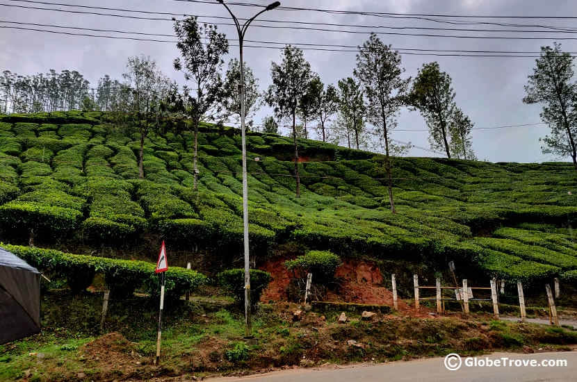 The tea gardens by the side of the road was one of our stops in our day trip to Munnar