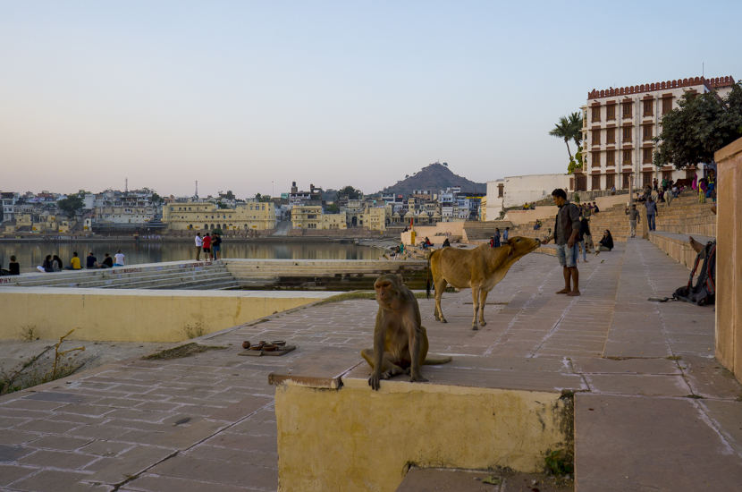 Pushkar should be part of your one month itinerary of north India