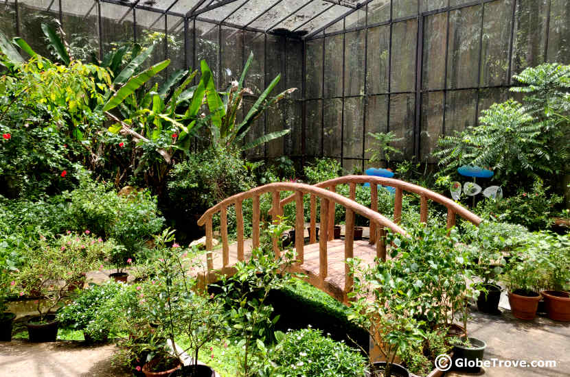 Inside the butterfly garden in Tasek Merimbun Heritage Park